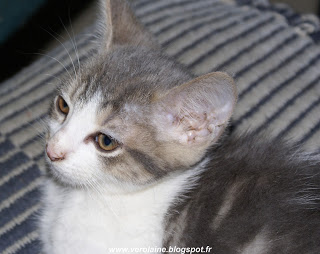 chaton a donner 54