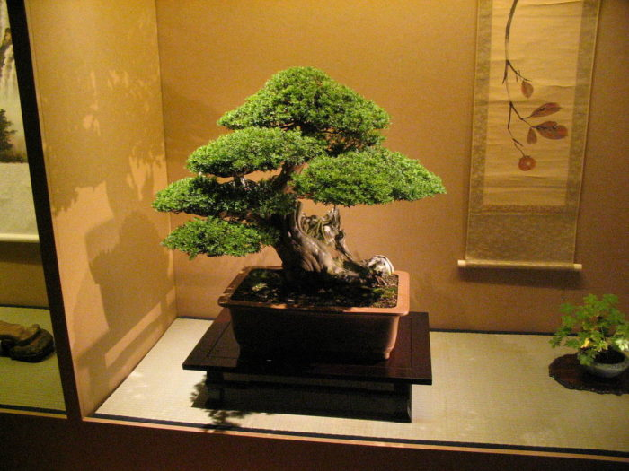 pot pour bonsai